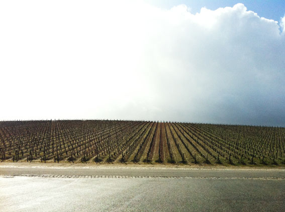 Vineyards at Lafite