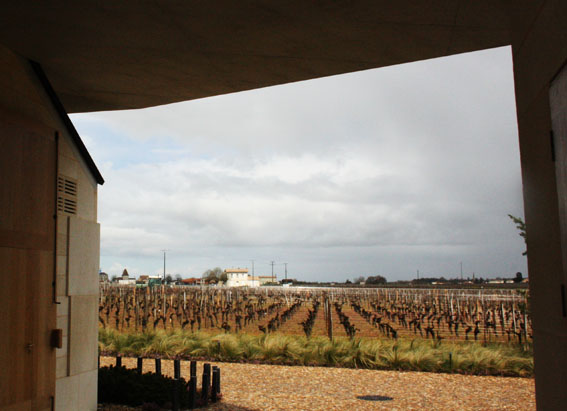 View of the Le Pin Vineyards